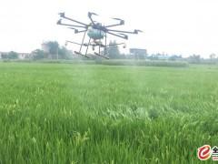 四川成都无人机飞机水稻打药玉米打