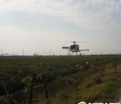 无人直升机喷洒农药服务
