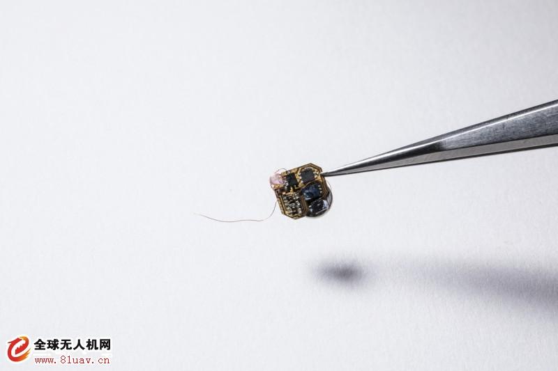 比无人机更持久!蜜蜂背起感测器出任务 替科学家收集田野资料