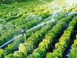YAMAHA 设 25 所无人机学校 提升农业生产力