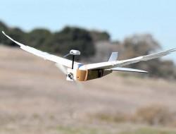 军方为什么要研究带羽毛的鸽子仿真无人机?