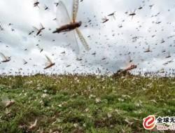 20架无人机严阵以待!大理州发布施行沙漠蝗防控
