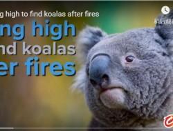无人机在丛林大火区寻找幸存的考拉