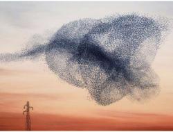 无人机蜂群组网数据链解决方案